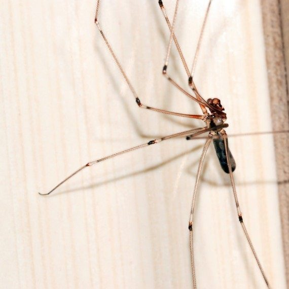 Spiders, Pest Control in East Dulwich, SE22. Call Now! 020 8166 9746
